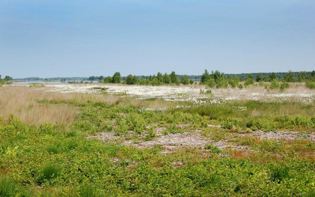 Steeds meer toeristen weten de weg naar het Bargerveen te vinden